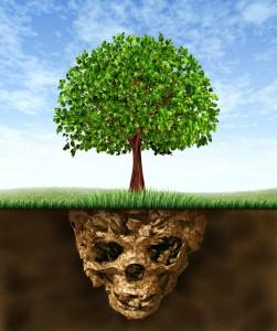 environmental services for soil
